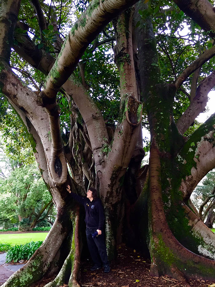Steve with one of Auckland's amazing trees