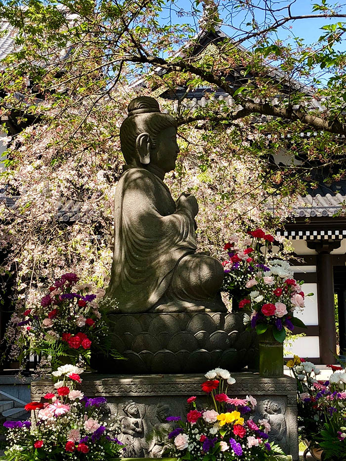 Statue and gardens with cherry blossoms, Hasedera Temple, Kamakura