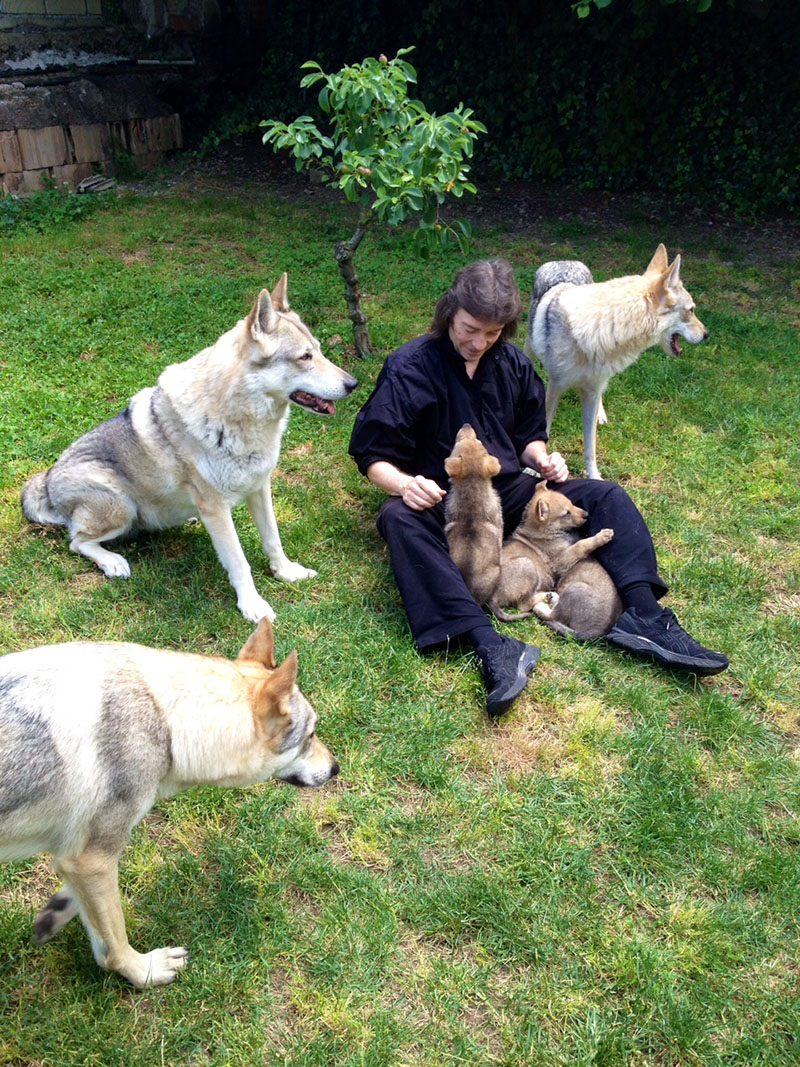Steve with the wolves